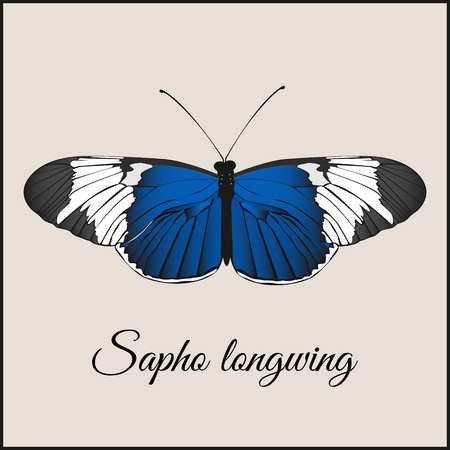 longwing: Vintage card with butterfly. Minimal flat vector illustration. Sopho longwing. Lettering handwriting calligraphy. Vintage or retro greeting postcard.Print or web.Packing