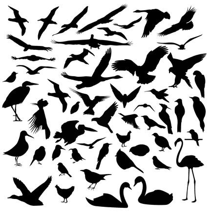 usignolo: Uccelli sagome Vettoriali