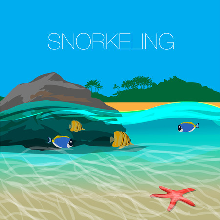 shallow: Underwater  snorkeling in a clear tropical water at coral reef