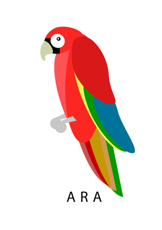 ara: Ara parrot. Red ara vector illustration. Exotic ara bird in flat design.  Geometrical ara isolated on white background. Tropical cartoon ara.