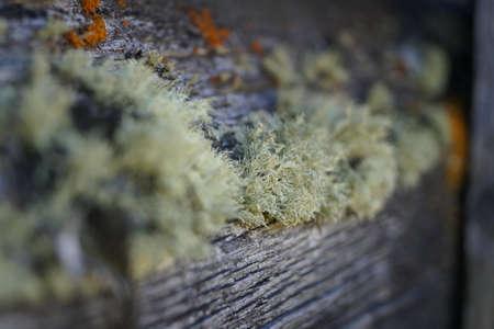 degradation: moss