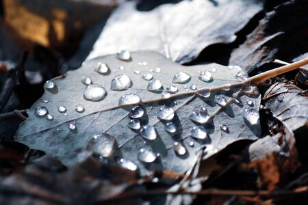 Water droplets on green leaf lying on the ground. Autumn concept. Copy space for your text.