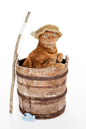 An orange Tabby cat wearing a crocheted fisherman hat and standing in an old, weathered wooden bucket with a stick fishing pole and crocheted fish  Shot in the studio on a white background Includes a clipping path  photo