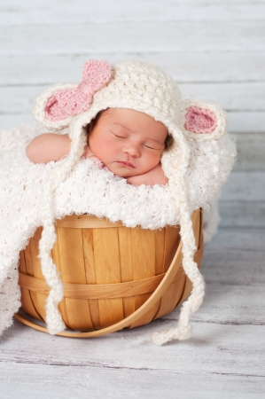 8 day old newborn girl wearing a crocheted lamb hat and sitting in a basket on a bleached wood background   Stock Photo
