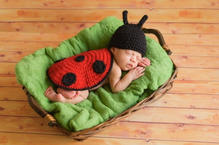 Three  3  week old newborn baby girl wearing a crocheted black and red ladybug costume  The infant is sleeping on a green blanket inside of a basket