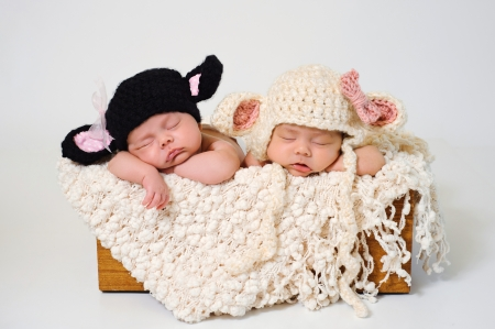 Sleeping fraternal twin newborn baby girls wearing crocheted black lamb and white lamb hats  Stock Photo