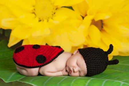 8 day old newborn girl wearing a black and red crocheted ladybug costume and sleeping on the leaf of a yellow flower Stock Photo