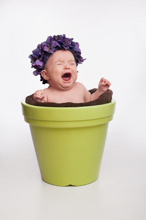 3 month: A crying 3 month old baby girl wearing a purple, hydrangea hat and sitting in a lime green flower pot.