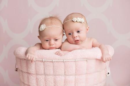 niñas gemelas: Siete semanas de edad, niñas gemelas fraternas que se sientan en una cesta de alambre. Filmada en el estudio sobre un fondo de color rosa. Foto de archivo
