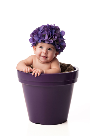 6 month old: A smiling 6 month old baby girl wearing a purple, hydrangea flower hat and sitting in a purple flower pot. Shot in the studio on an isolated white background. Stock Photo