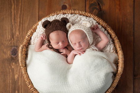 fraternal: Three week old fraternal, twin baby boys wearing bear bonnets and sleeping in a wicker basket. Shot in the studio on a wood background.