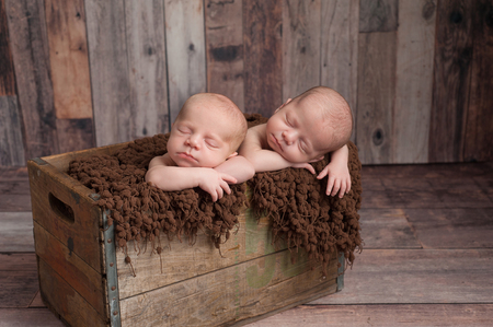 wooden crate: Four week old fraternal, twin, newborn baby boys sleeping in a vintage, wooden crate. Shot in the studio on a wood background.