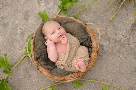 beach wrap: An alert, three week old, newborn, baby boy swaddled in a beige wrap and lying in a round, organic basket. Shot with a sand and beach vegetation background. Stock Photo