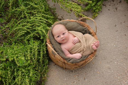 swaddled: An alert, three week old, newborn, baby boy swaddled in a beige wrap and sleeping in a round, organic basket. Shot with a sand and beach vegetation background.