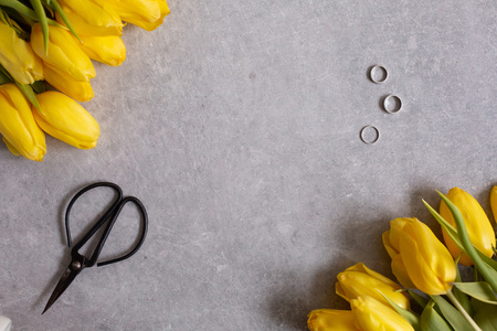 Gray background with yellow flowers tulips and scissors top view table