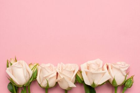 Beautiful white roses flower on pink background with copy space for your text