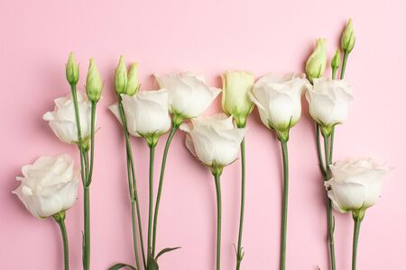 White eustoma flowers on pink background. Minimalistic composition for holidays. top view. Stock fotó