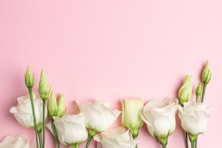 White eustoma flowers on pink background with copyspace. Minimalistic composition for holidays. top view.
