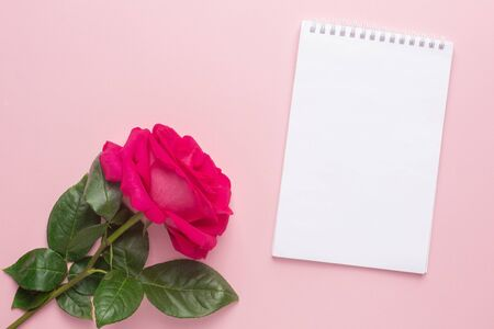 Notebook and dark pink rose on a pink background top view Standard-Bild