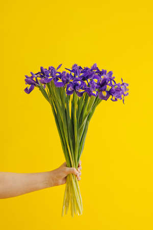 Hand holds bouquet of blue irises on yellow background. Birthday, March 8 Women's Day, love and congratulatory concept. vertical side view Stockfoto