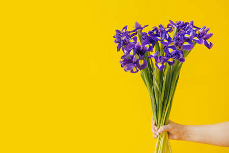 Hand holds bouquet of blue irises on yellow background. Birthday, March 8 Women's Day, love and congratulatory concept. banner with copy space for text side view