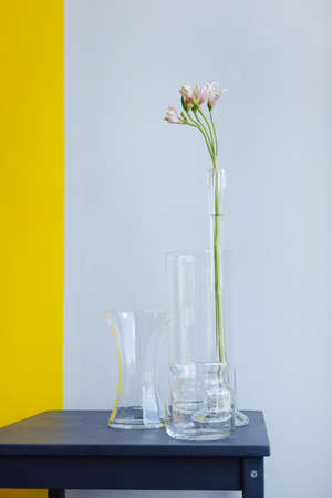 Three glass vases with white flower on gray yellow background. Antique interior decoration objects side view Stockfoto