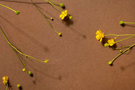 Yellow wildflowers on brown background with copyspace. Modern trendy composition with dried flower , dark shadows top view Stockfoto
