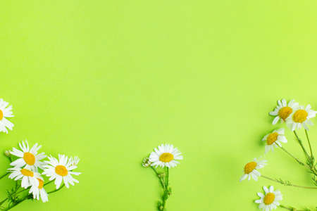 Daisy camomile flowers on green background with copy space top view