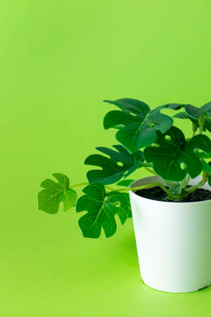Grassy green plastic plant in pots on green background isolated Stockfoto