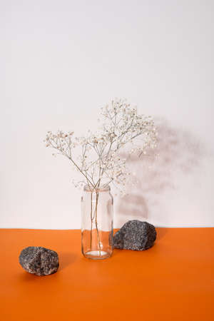 Decoration concept - still life of dried flowers in vases with hard shadows.Minimalist composition