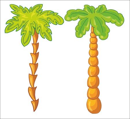 chaume: illustration vectorielle - palmier sur fond blanc