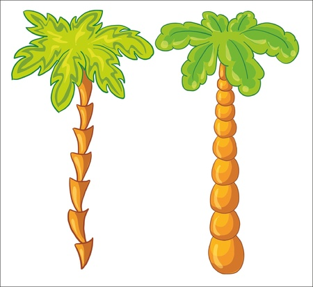 palmtrees: ilustraci�n vectorial - palmera sobre fondo blanco