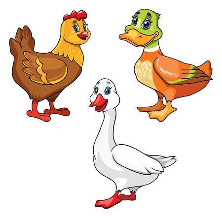 large group of animals: set of poultry, vector illustration on white background Illustration
