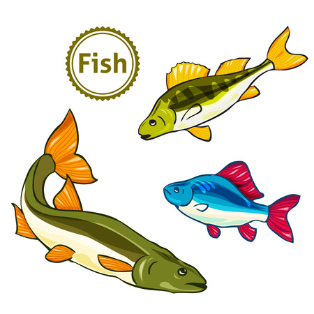 the animated film: Vector illustration of fishes. Perch, salmon.