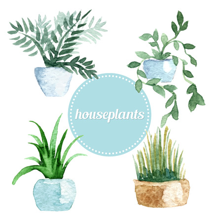 Watercolor vector set of house plants. Vector illustration 矢量图像