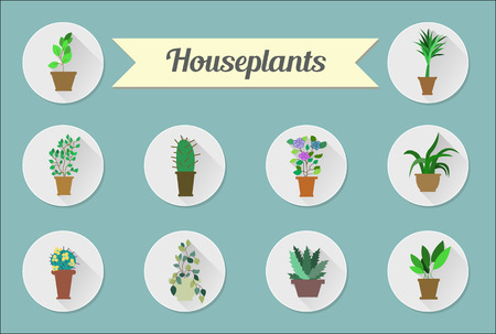 Set of flat vector icons. House plants. Vector illustration Ilustrace