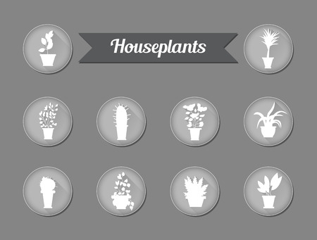 house plants: Set of flat vector icons. House plants. Vector illustration Illustration
