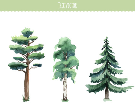 Set of watercolor trees. Birch, pine, fir-tree. Vector Çizim