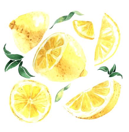 limón: Conjunto de la acuarela de los limones. Segmentos de limón, limón jugoso. Ilustración vectorial Vectores