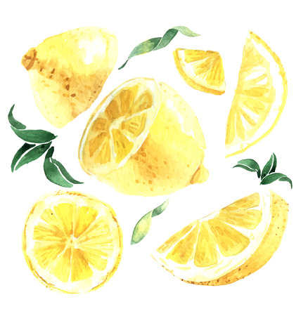 lemon: Watercolor set of lemons. Lemon segments, juicy lemon. Vector illustration