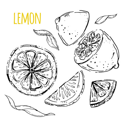 The drawn set of lemons. Lemon segments, juicy lemon. White background. Vector illustration