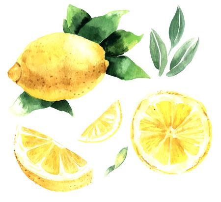 lemon: Conjunto de la acuarela de los limones. Segmentos de lim�n, lim�n jugoso. Ilustraci�n vectorial Vectores