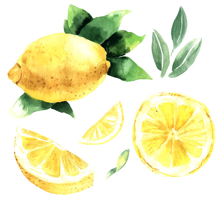 botanical: Watercolor set of lemons. Lemon segments, juicy lemon. Vector illustration