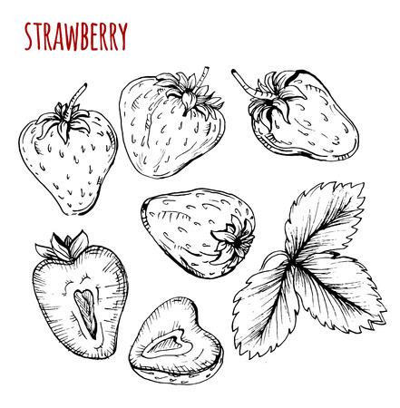 fresa: Establecer dibujo fresa. Fresa en un fondo blanco. Ilustración vectorial Vectores