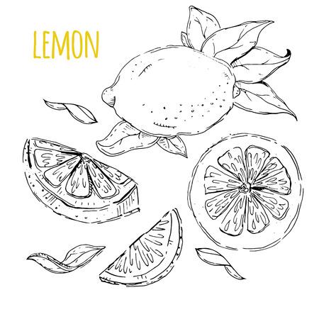 zest: The drawn set of lemons. Lemon segments, juicy lemon. White background. Vector illustration