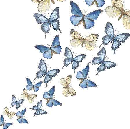 yellow flower: The flying-up watercolor butterflies. Vector illustration