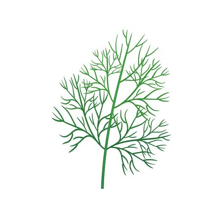 Realistic fresh dill leaf herb. Isolated flat vector element for advertising placard or banner. Vector illustration on white isolated background