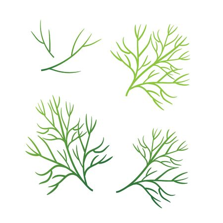 Realistic fresh dill leaf herb. Isolated flat vector element for advertising placard or banner. Vector illustration on white isolated background Фото со стока - 130800900