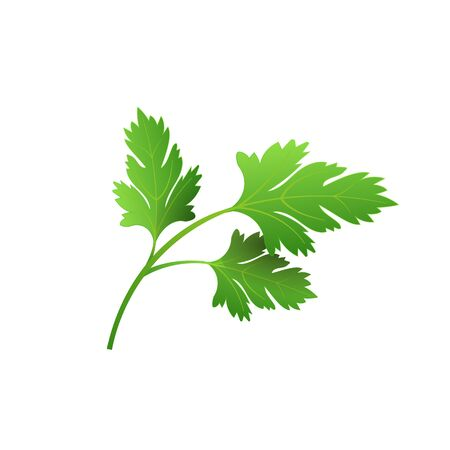 Realistic fresh parsley leaf herb. Isolated flat vector element for advertising placard or banner. Vector illustration on white isolated background 免版税图像 - 130854884