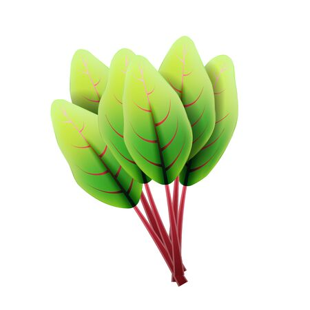 Fresh swiss chard leaf. 3D realistic vector set beet leaves. Healthy aroma. Isolated on white background. Herbs and spices kitchen set. Vector